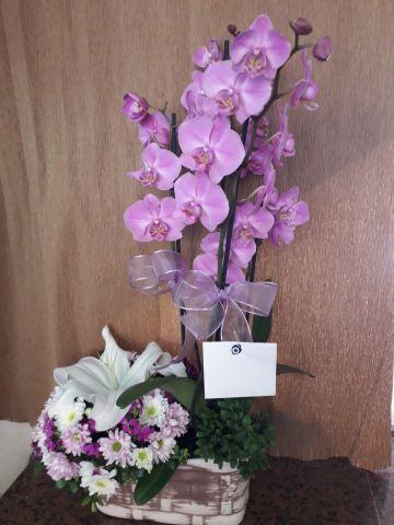 arajmanlı 3 dallı orkide