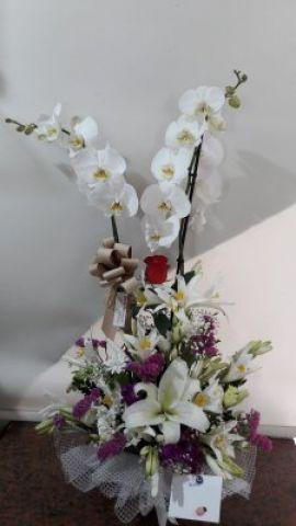 çift dal beyaz orkideli arajman