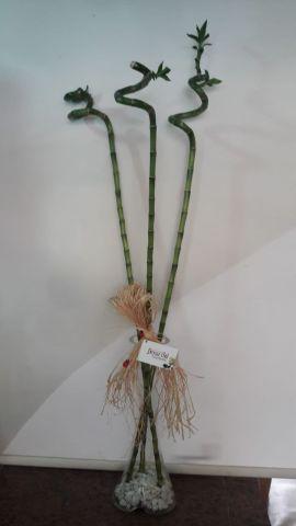 bambu 3 ad.